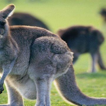 Melbourne Philip Island 6