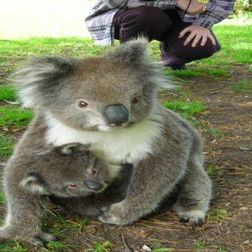 Melbourne Philip Island 7
