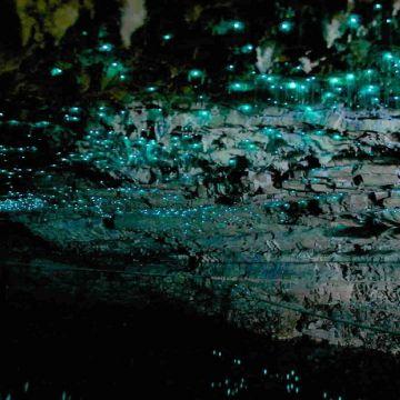 Waitomo Glow Worm Caves 4