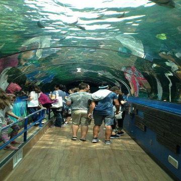 Sydney Seal Life Aquarium 2