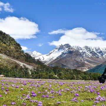 Darjeeling -Lachung - Gangtok 6