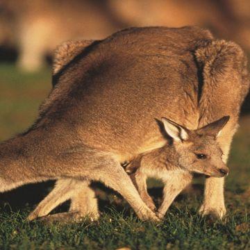 Melbourne Philip Island 4