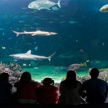 Sydney Sea Life Acquarium 3